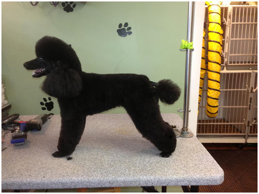 the barking spa pet grooming salon and pet grooming school